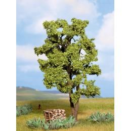 21660 Acacia 15cm