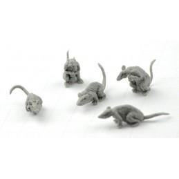 Rats géants
