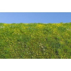 F561 champ printanier en fleur (18 x 28cm)