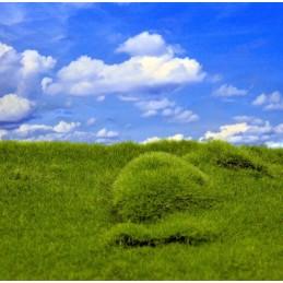 Plaine et collines