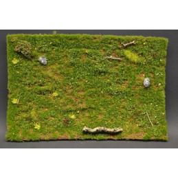 Prairie sauvage printanière