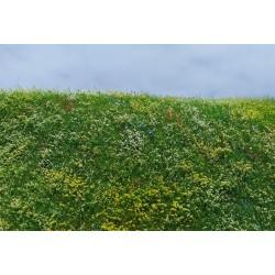 F562 champ en fleur début d'été (18 x 28cm)
