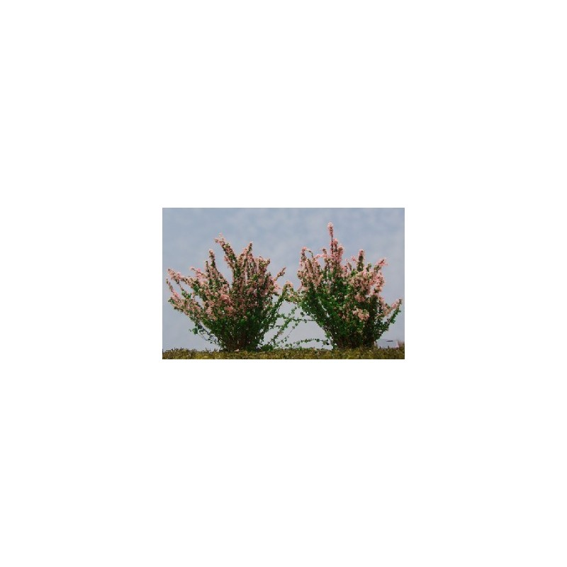 Buisson fleuri
