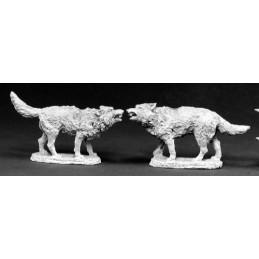 02415 Loups affamés