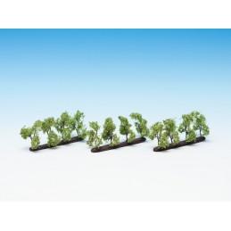 21535 Petits arbres de plantations