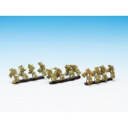 21532 Petits arbres de plantations avec fruits