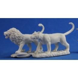 77341 Lion et lionne