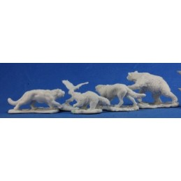 77216 Petits animaux sauvages