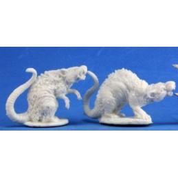 77198 Rats géants