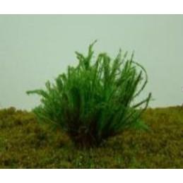Buisson fleuri vert