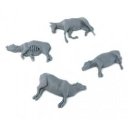 Carcasses et animaux morts