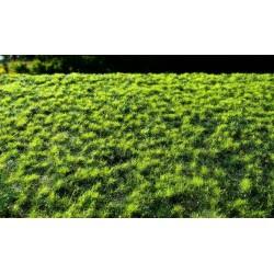 F018 prairie d'automne avec de petites touffes (18 x 28cm)