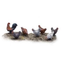 Poules et coq
