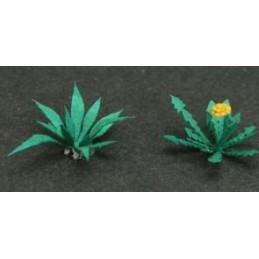 GL051 18 pissenlit fleuris et 6 plantains anglais