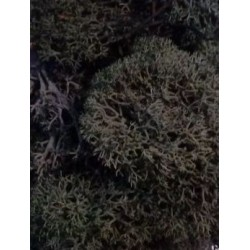 Mousse vert foncé