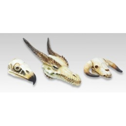 Crânes de monstres