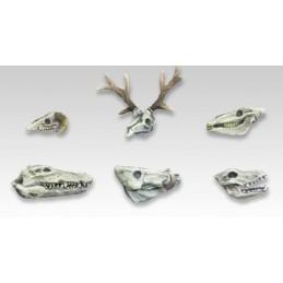 Crânes d'animaux