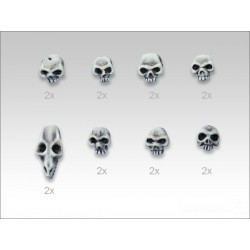 Set de 16 crânes