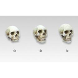 Set de 12 crânes de 54mm
