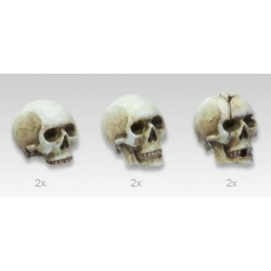 Set de 6 crânes de 90mm