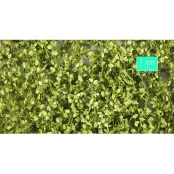 920-31SX Feuillage de hêtre printanier
