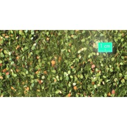 920-33SX Feuillage de hêtre début d'automne