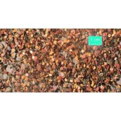 920-34SX Feuillage de hêtre fin d'automne