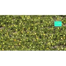 910-33SX Feuillage de bouleau début d'automne