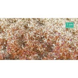 726-34SX touffes fleuries fin d'automne