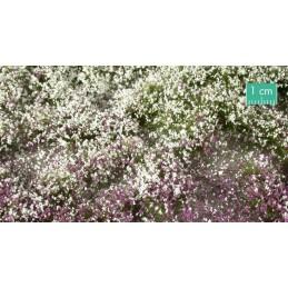 726-33SX touffes fleuries début d'automne