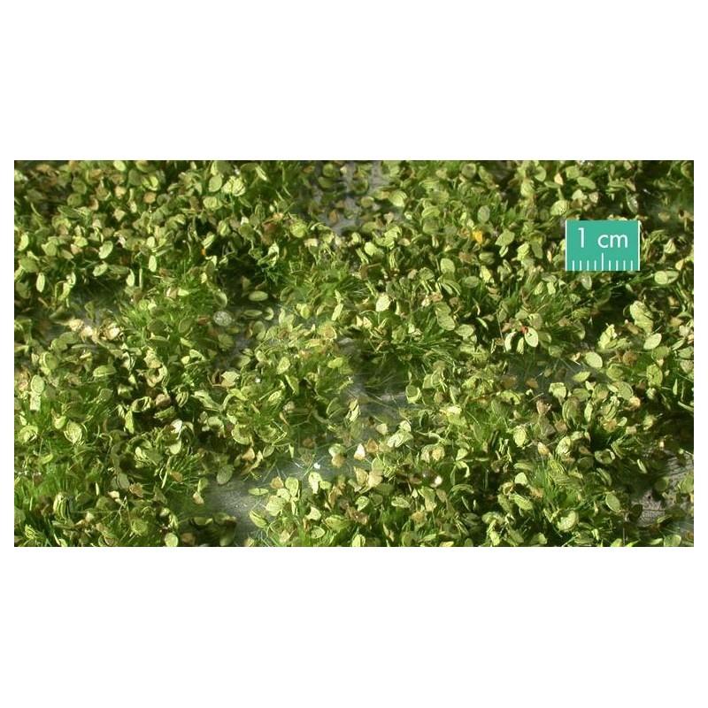 725-31SX Mauvaises herbes printanières