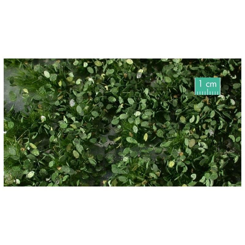 725-32SX Mauvaises herbes estivales
