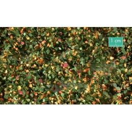 725-33SX Mauvaises herbes début d'automne