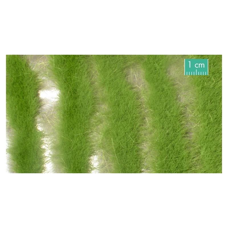 728-31SX Longues bandes herbeuses printanières