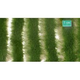 728-32SX Longues bandes herbeuses estivales