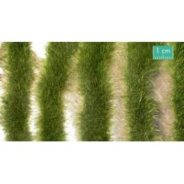728-33SX Longues bandes herbeuses début d'automne