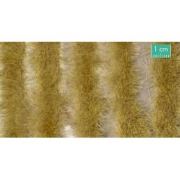 728-34SX Longues bandes herbeuses fin d'automne