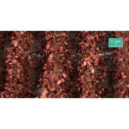 766-34SX Bandes agricoles avec feuilles fin d'automne