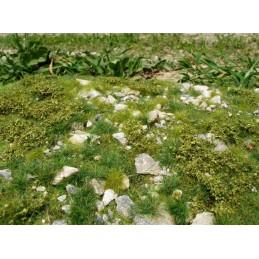 F722 Steppe pierreuse début d'été (18 x 28cm)