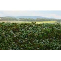 F620 Sol de forêt-myrtilles (18 x 28cm)