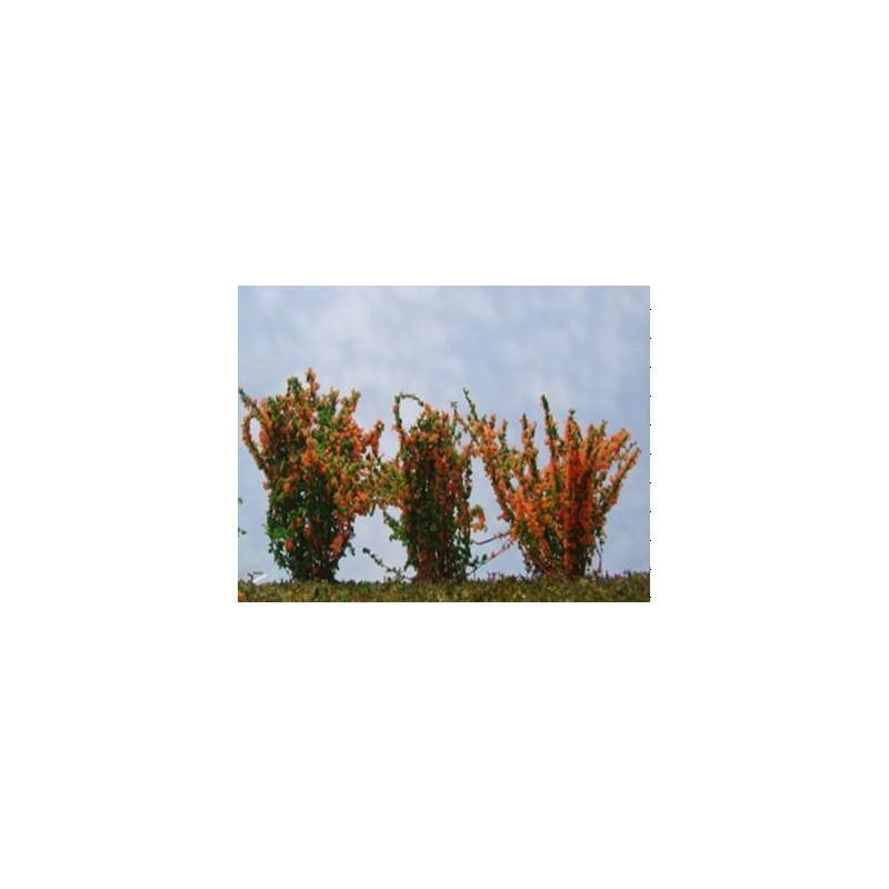 Buisson fleuri orange
