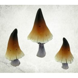 Grands champignons forestiers