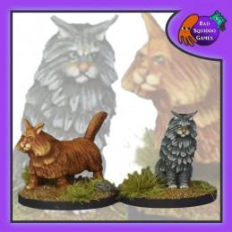 Chats Freyja (2)
