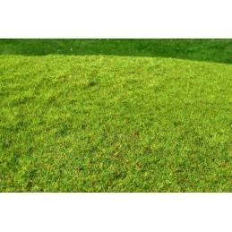 F001 Prairie herbe courte -...