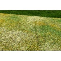 F003 Prairie herbe courte -...