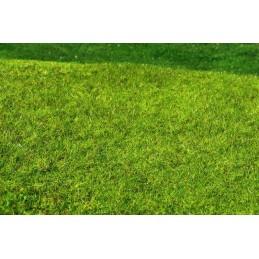 F021 Prairie herbe haute -...