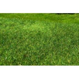F022 Prairie herbe haute - été