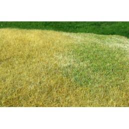 F023 Prairie herbe haute -...