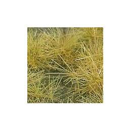 GL-030 Touffes herbe sèche...
