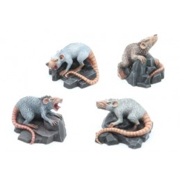 Rats géants (4)